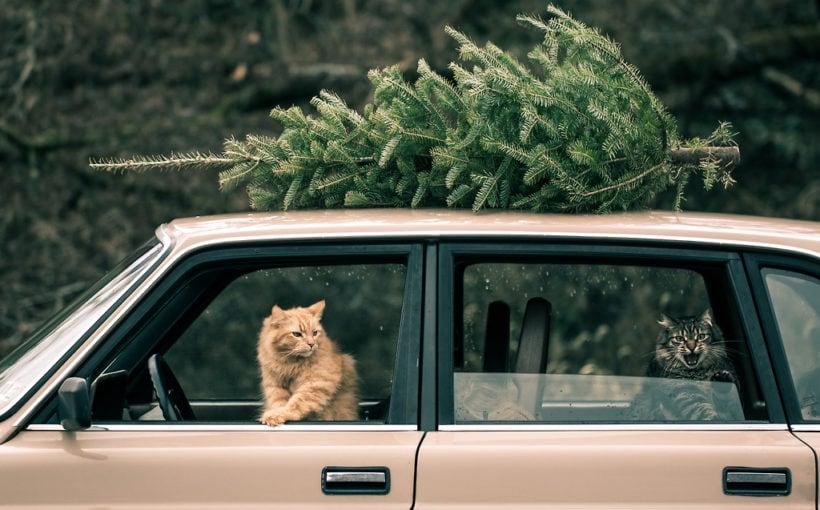 машина с котом